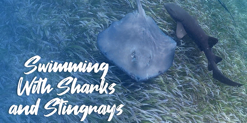 Swimming With Sharks and Stingrays In Belize